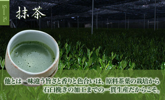 Fresh tea leaves as a raw material is the life of Matcha tea.